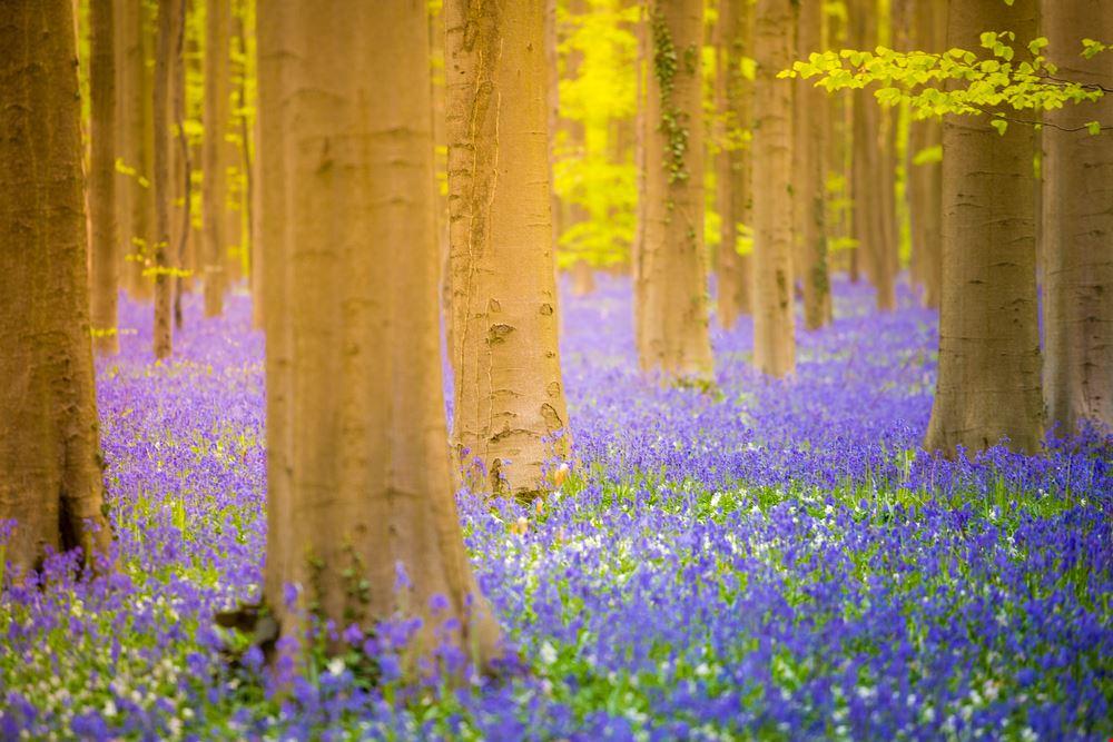 Foresta Blu