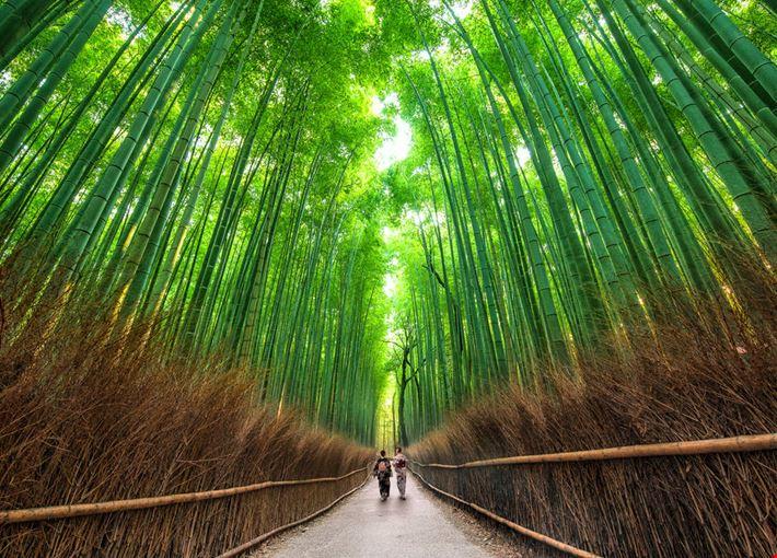Bosco Di Bamb.Foto Bosco Di Bambu A Kyoto 1000x667 Autore Redazione