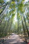 Bosco di Bambù