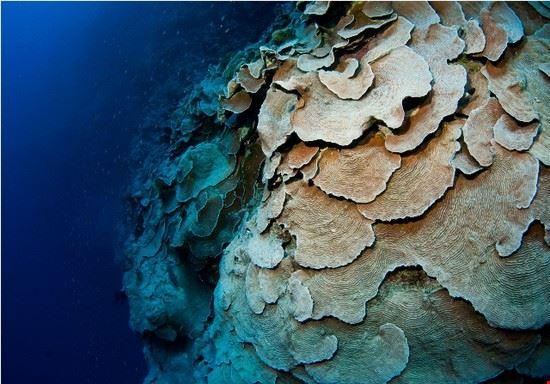 dahab unterwasserwelt