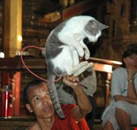 Jumping Cat Monastry, Inle Lake