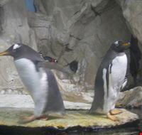43817 pinguini genova