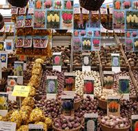 44110 amsterdam bulbi al mercato dei fiori di amsterdam