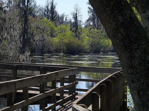 Photo Lettuce Lake Park In Tampa Pictures And Images Of