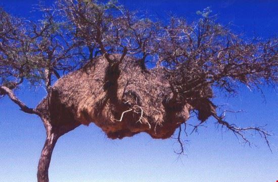 nido windhoek
