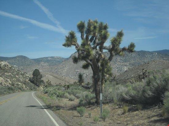 paesaggio sequoia national park