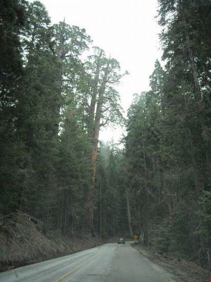 sequoia sequoia national park