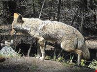 fox yosemite national park