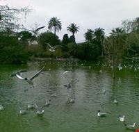 45380 parco della cittadella  lago delle antre barcellona