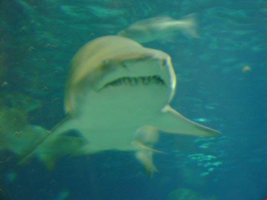 Acquario di Barcellona - squali