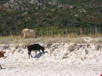 i proprietari della spiaggia di lodo bastia