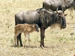 46435 bamako park animal