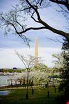 washington washington monument