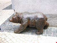 l'orso... in cerca di amici!