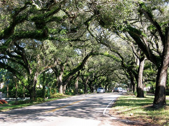 Photo Miami Coconut Grove In Miami Pictures And Images