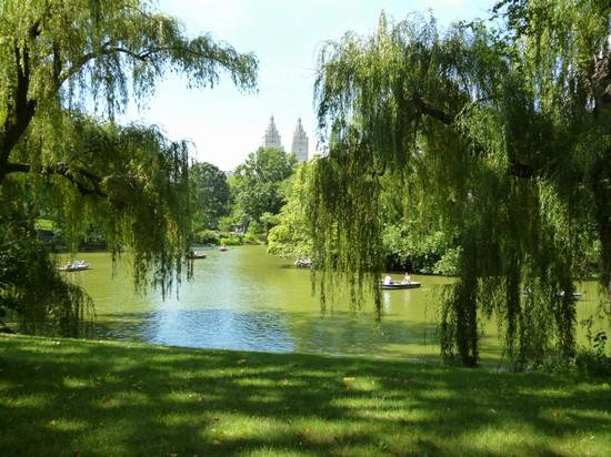 Foto central park a new york 550x412 autore lorenzo for Immagini desktop new york