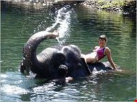 Elephants at Waterfall