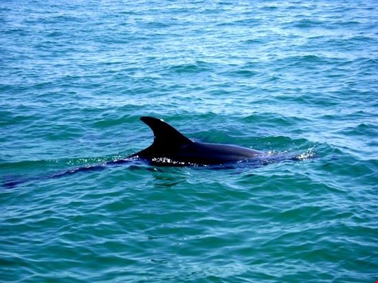 golfinos delfini cascais