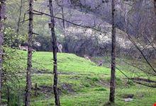 Parco Pineta - Daini