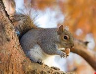 londra parchi di londra e gli scoiattoli