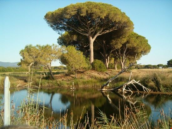 Principina a Mare - Parco Naturale della Maremma