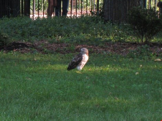 51824 new york un falco a tompkins square park