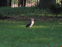 new york un falco a tompkins square park