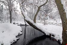 milano parco sempione sotto la neve a milano