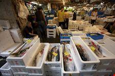 Tsukiji market a Tokyo
