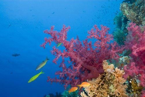 52597 sharm el sheikh pesci e coralli del mar rosso