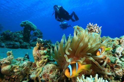 Immersione nel Mar Rosso, Sharm el Sheikh