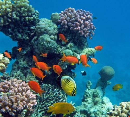 Snorkeling nel Mar Rosso, Sharm el Sheikh