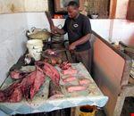 52667_zanzibar_il_pesce_di_jambiani