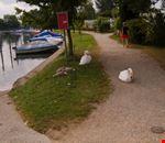 Nidiata sul lago