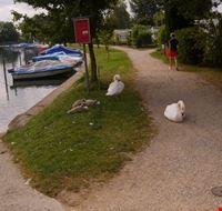 losanna nidiata sul lago