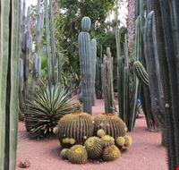 53234 marrakech jardin majorelle