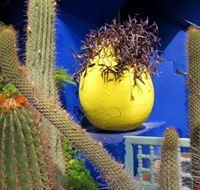 53236 marrakech jardin majorelle