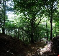53738 lugano il bosco dove e stato costruito il parco