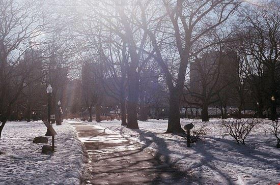 54361 toronto allan gardens in inverno