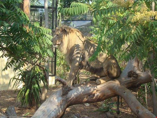 lo zoo parchi e giardini a nizza On noleggio di una cabina nei parchi statali pa