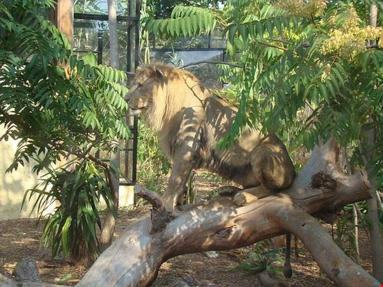 54590 nizza zoo di cap-ferrat nei pressi di nizza