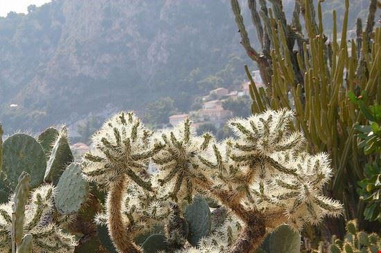 Giardino Esotico a Montecarlo