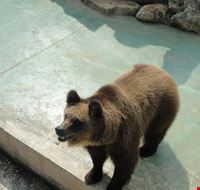 orso bruno fasano