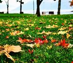 Tappeto d'autunno al Boschetto di Germignaga