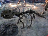 pechino museo di storia naturale a pechino