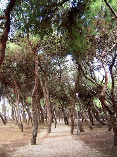 Pineta a porto sant 39 elpidio - Ristorante il giardino porto sant elpidio ...