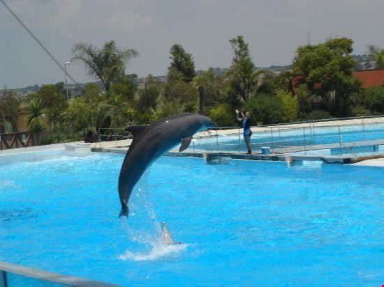 56094 pomezia delfino