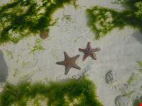 stelle di mare