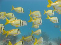 Discover Scuba Diving on the reef
