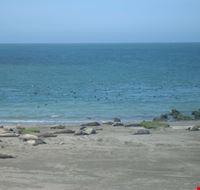 leoni marini puerto madryn
